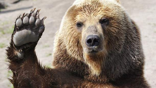 Омелян каже, що тепер в Росію ходитимуть лише ведмеді