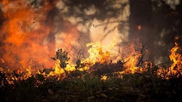 Пожар на Полтавщине: горит 10 гектаров торфяников