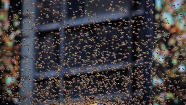 NYPost: вНью-Йорке из-за пчел перекрыли площадь Таймс-сквер