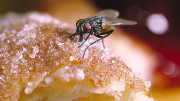 Можно есть продукты, на которые села муха