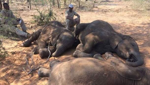 87 мертвых слонов обнаружили неподалеку от заповедника в Ботсване