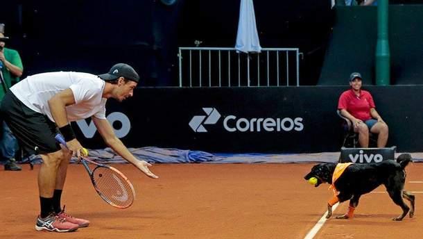 Собаки-болбої на Brasil Open