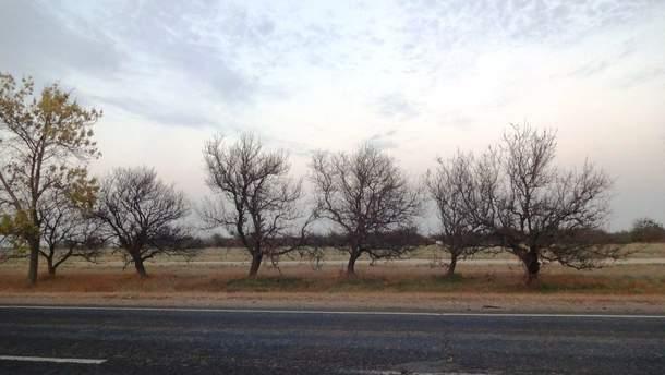 Экологическая катастрофа из-за химвыброса в оккупированном Крыму