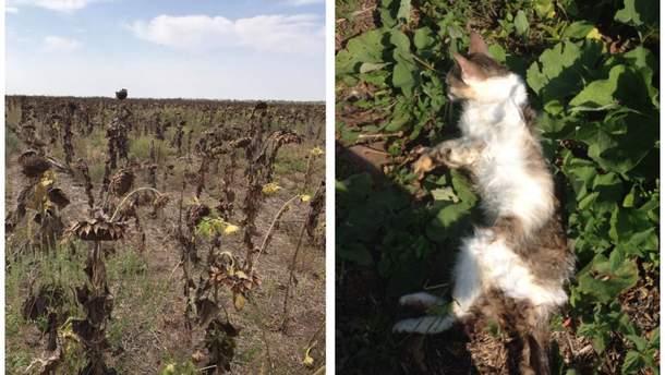 Из-за химических выбросов в Армянске гибнут животные и растения