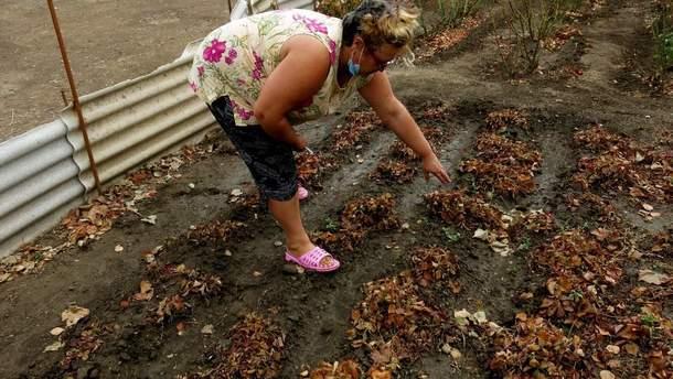 Из-за химвыбросов в оккупированном Крыму засыхает урожай