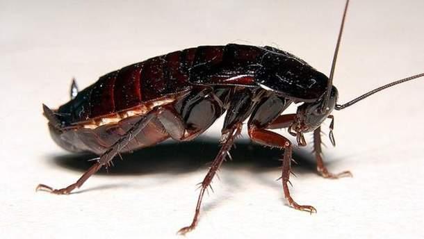 Почему тараканы так опасны