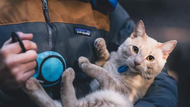Туляремией можно подцепить от кота
