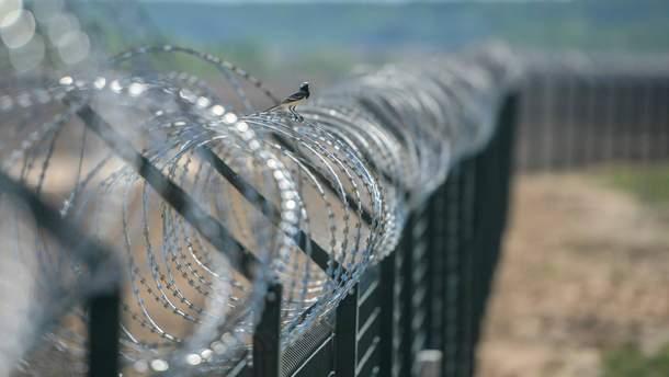 Финляндия хочет построить на границе с Россией из-за африканской чумы свиней