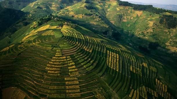 Украине нужен рынок земли: почему это важно