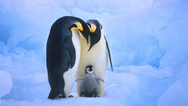 У Данії розгорнулася справжня пінгвінодрама
