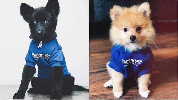 Бренд одежды Pawlenciaga для собак