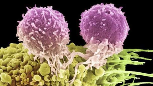 Так выглядят два Т-лимфоцита, которые атакуют раковую клетку
