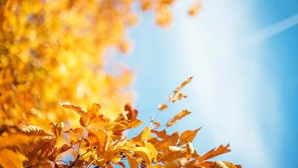 Прогноз погоды на 12 октября: яркое солнце, тепло и красивые туманы