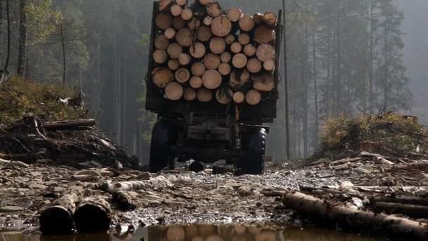 """""""Чорні"""" лісоруби знищують Карпати"""