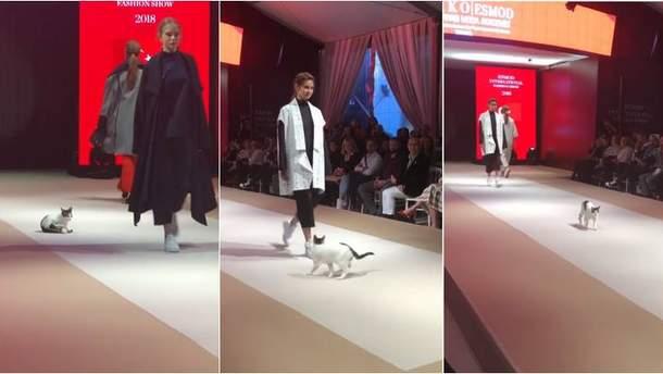 Бездомный кот покорил зрителей на модном показе