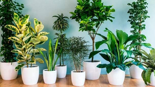 Названо найкорисніші для здоров'я кімнатні рослини