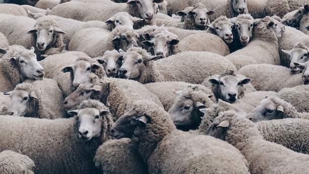 Госпродпотребслужба изменила правила перевозки животных