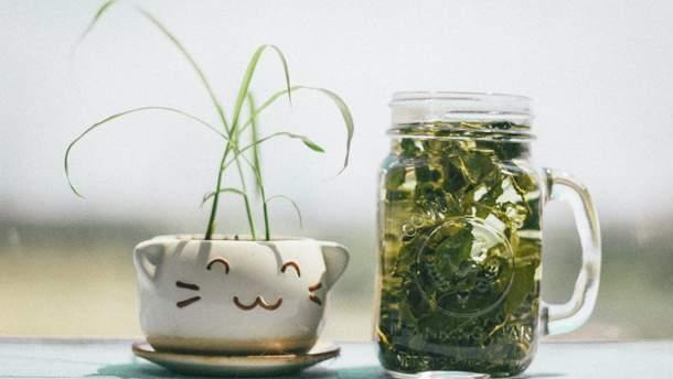 Споживання, здавалося б, надзвичайно корисного зеленого чаю може нашкодити печінці та ниркам