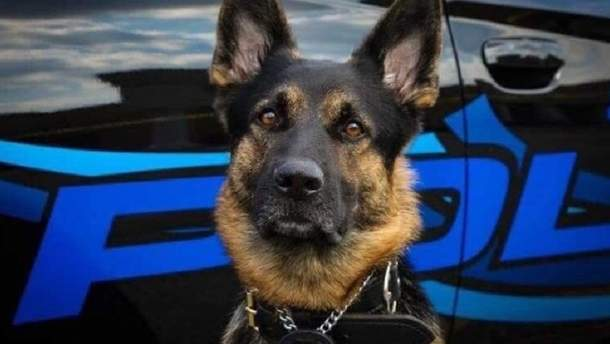 Полицейский пес Акс