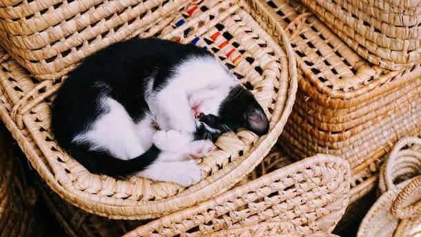 Коли краще спати