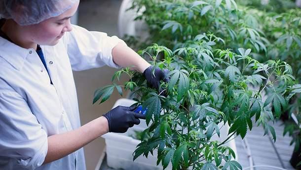 Канадська компанія медичних конопель інвестуватиме в Європу для вирощування конопель, які використовуватимуть у лікуванні.