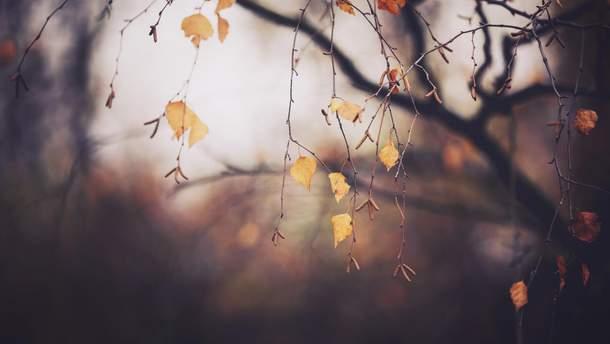 Прогноз погоди в Україні на 11 листопада