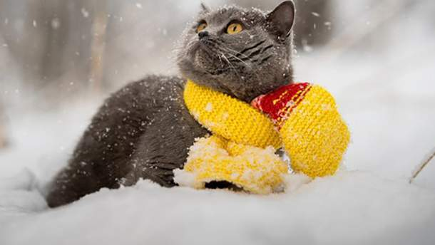 Когда в Украине наступит настоящая зима