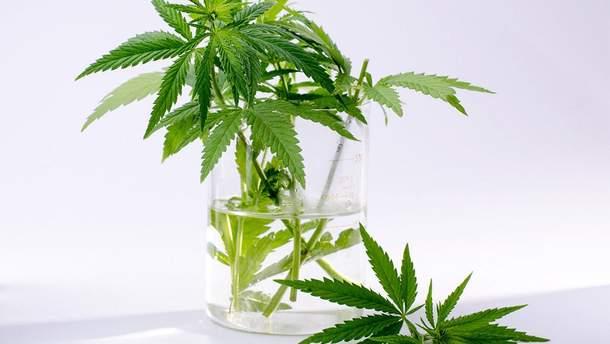 Где в мире легализована марихуана: инфографика