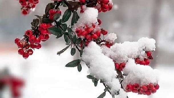 В Чернигове выпал первый снег