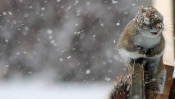 Из-за сильного ветра в Украине объявили штормовое предупреждение