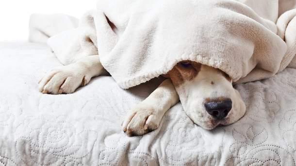 Ученые советуют женщинам спать с собакой