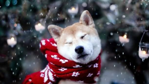 Погода на 2 грудня в Україні