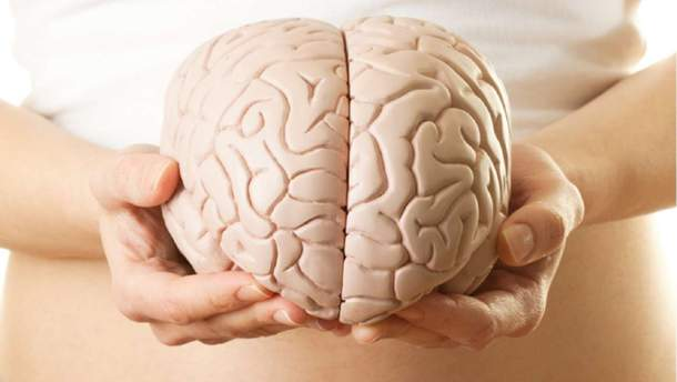 Залежність розміру мозку і інтелекту