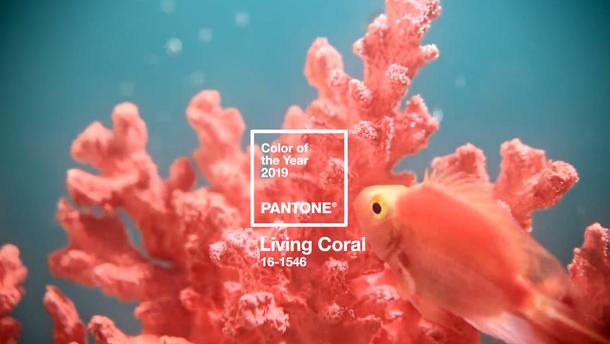 Living Coral – колір 2019 року