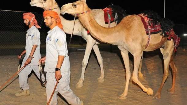 В ОАЕ запровадять поліцейські патрулі на верблюдах