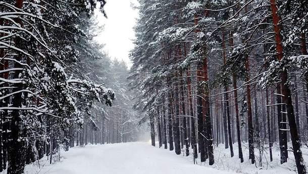 Погода 14 грудня 2018 Україна: прогноз погоди від синоптиків