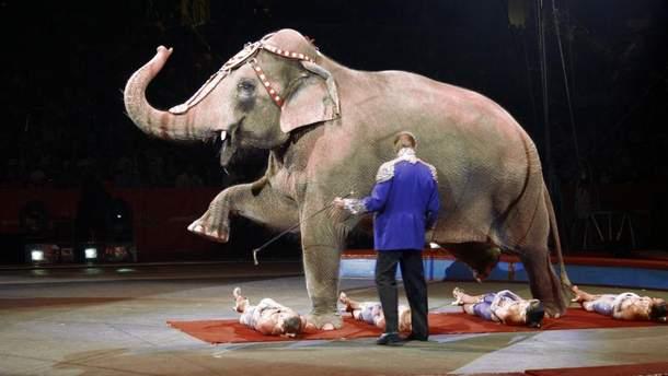 Закон назвали в честь слона Нози, с которым жестоко обращались в цирке