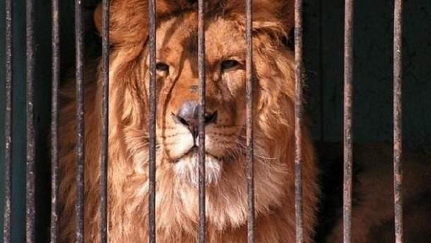 В Україні невдовзі можуть заборонити диких тварин у цирках