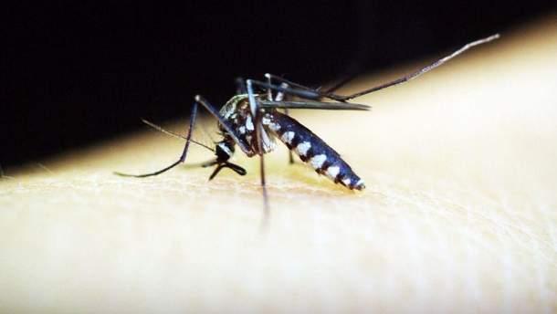 Во Львове зафиксировали случай малярии