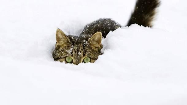 Погода 9 января 2019 Украина - прогноз синоптика