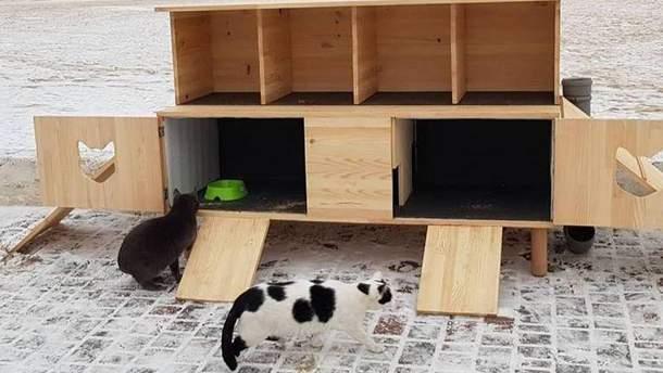 Дом для бездомных кошек на пляже в Одессе
