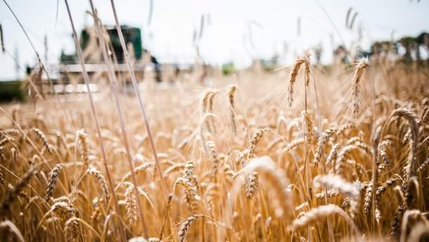 Україна потрапила до п'ятірки країн-лідерів з експорту агропродукції до ЄС