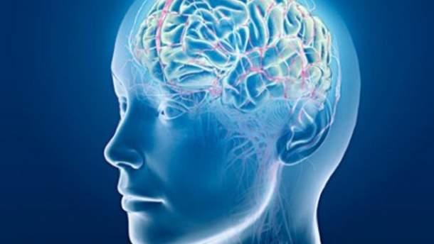 Новый участок мозга
