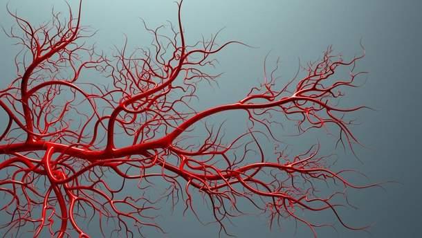 Науковці вперше виростили кровоносні судини людини