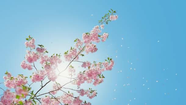 Коли буде весна в Україні 2019: прогноз погоди коли прийде весна