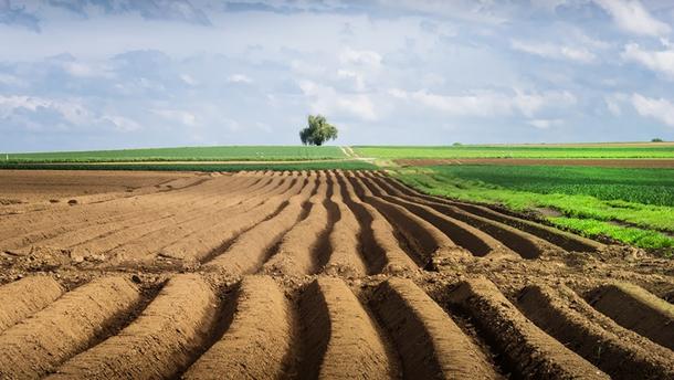 Сільськогосподарська земля
