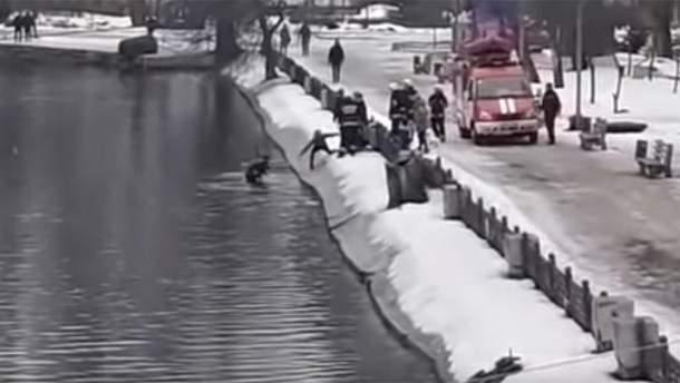 В Днепре собака провалилась под лед, парень нырнул в воду, чтобы спасти животное