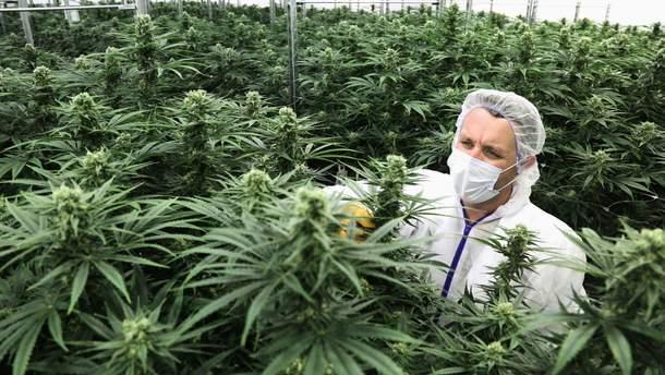 Легалізація медичного канабісу в Україні