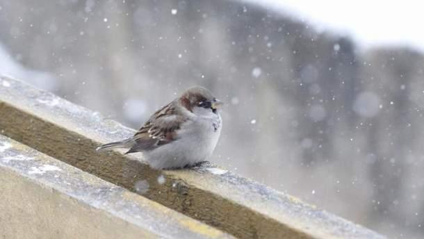Погода 12 лютого 2019 Україна: прогноз погоди від синоптика