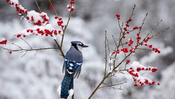 17 лютого 2019 – свято в Україні та що не можна робити 17 лютого 2019